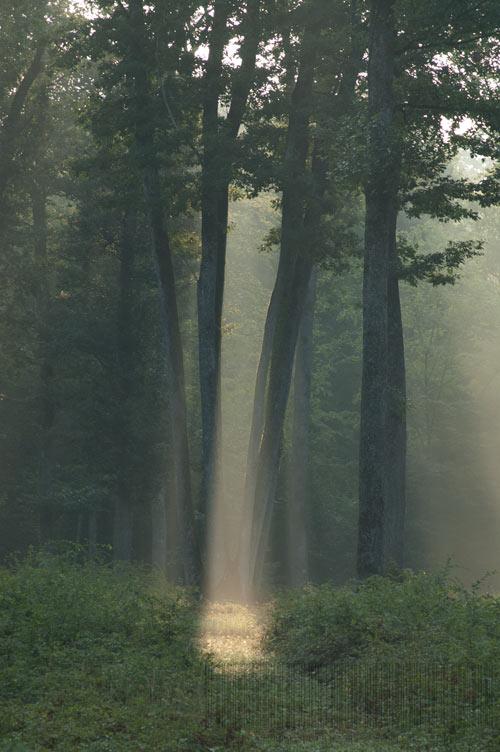 Les hautes futaies de la forêt de Tronçais