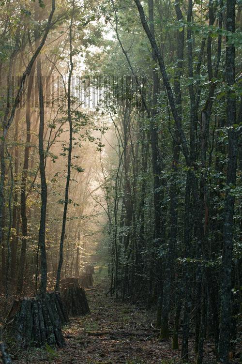 Un layon en forêt de Tronçais