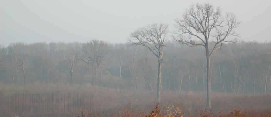 La futaie Colbert, parcelle emblématique de la forêt de Tronçais