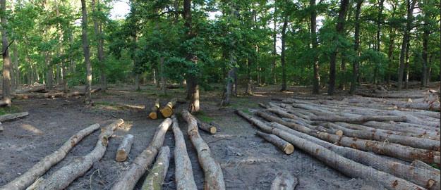 Gestion de la forêt de Tronçais
