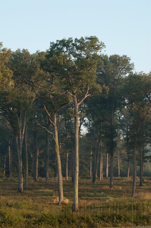 Forêt de Tronçais, la plus belle chenaie d'Europe