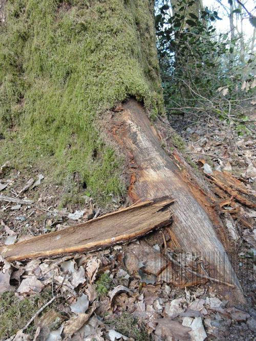 Écorçage de débardage au débusqueur, forêt de Tronçais