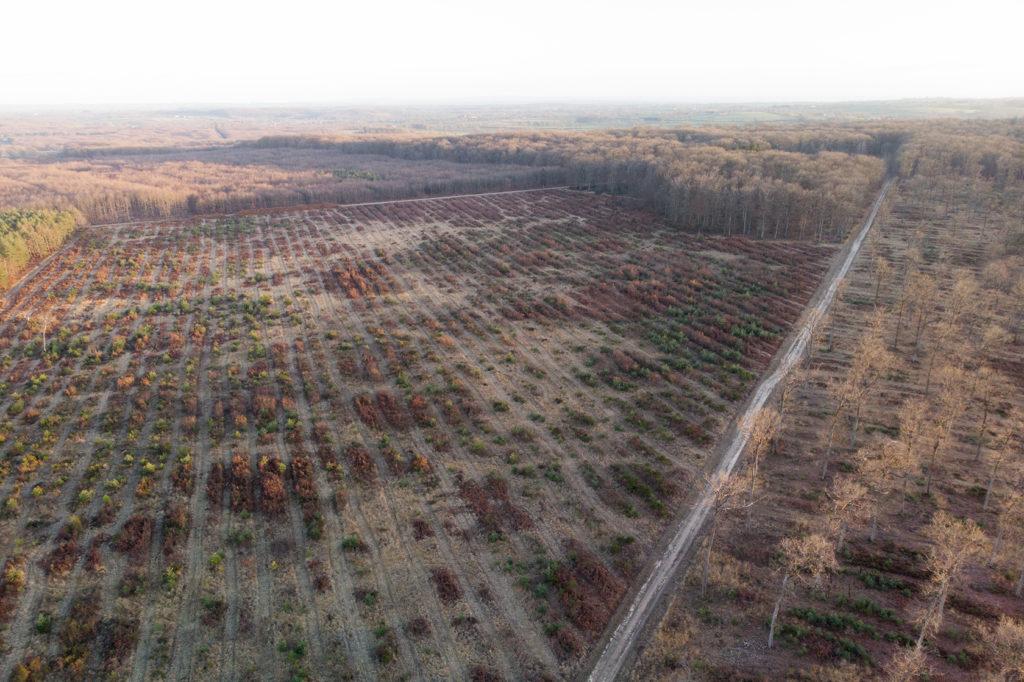 Cloisonnement de la forêt de Tronçais 2018