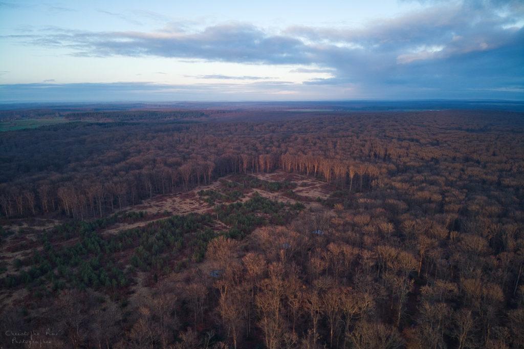 La forêt de Troncais,