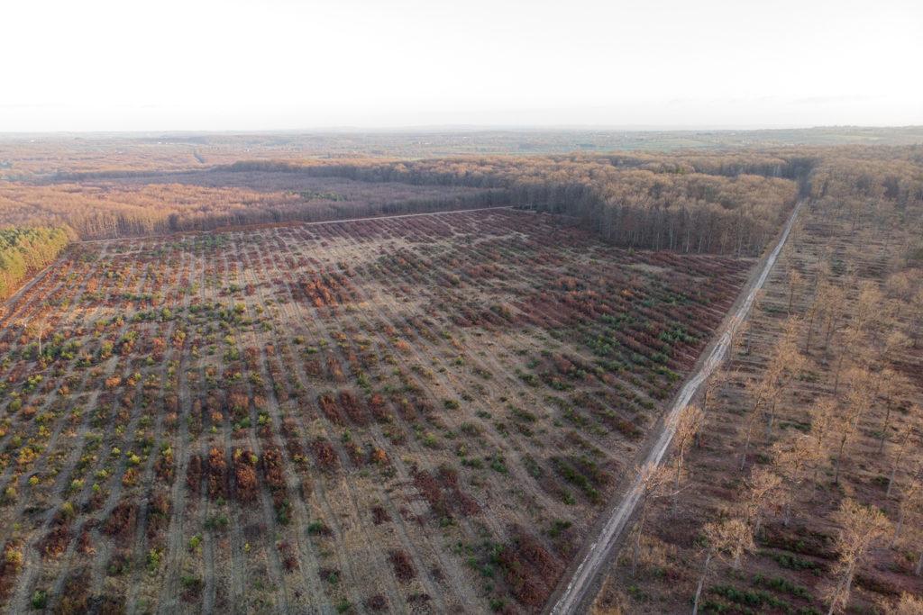 Forêt de Tronçais, layonnage intensif 2019, tous les 6 mètres